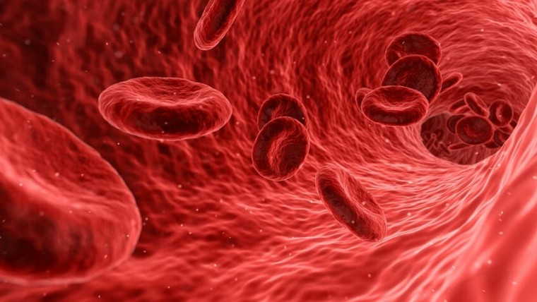 anatomi fisiologi darah