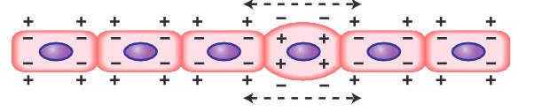 sel yang mengalami depolarisasi