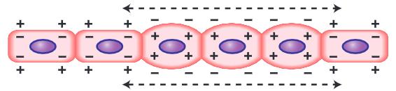 gelombang depolaraisasi sel